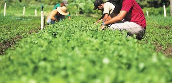 Saiba mais sobre o curso  Agroecologia