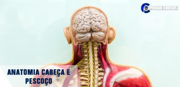 Saiba mais sobre o curso Anatomia Cabeça e Pescoço