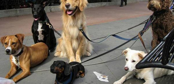 Saiba mais sobre o curso Cuidador de Cães
