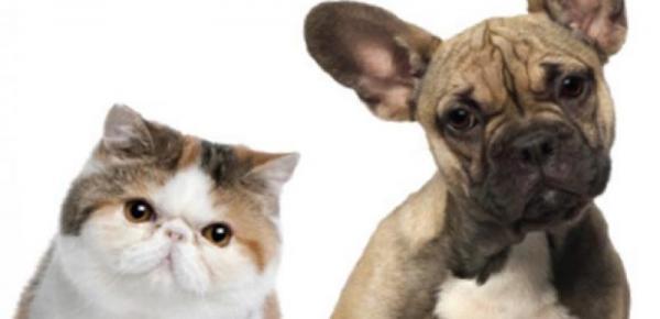 Saiba mais sobre o curso Primeiros Socorros (Cães e Gatos)