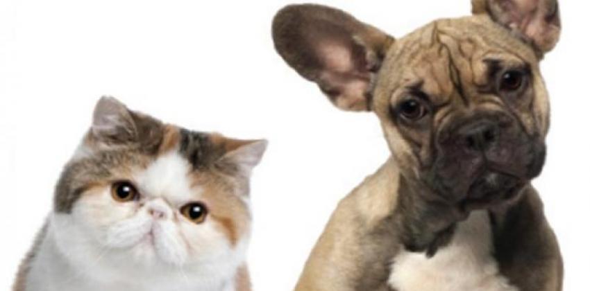Minicurso Primeiros Socorros (Cães e Gatos)