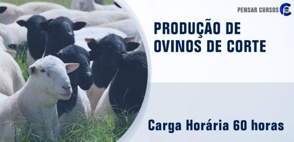 Saiba mais sobre o curso Produção de Ovinos de Corte