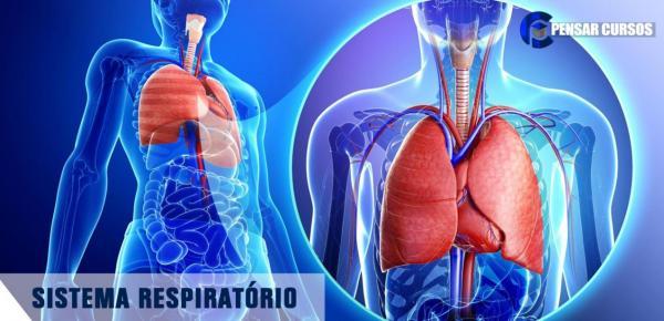 Saiba mais sobre o curso Sistema Respiratório