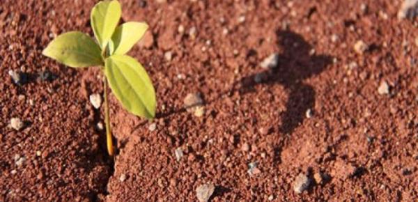 Saiba mais sobre o curso Solos e Fertilização