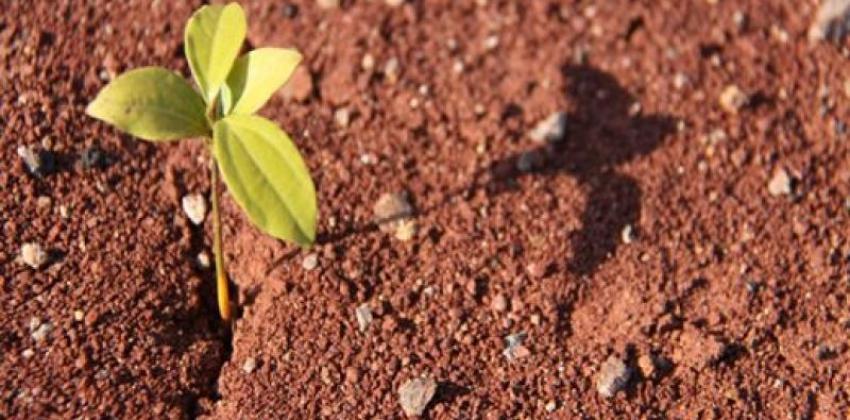 Solos e Fertilização