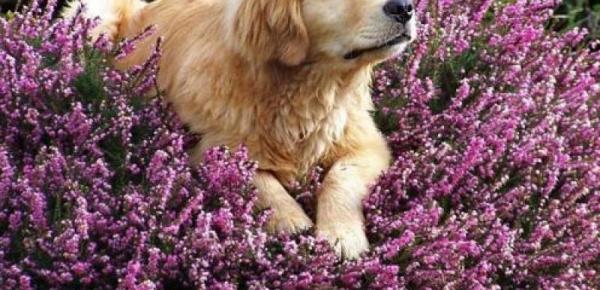 Saiba mais sobre o curso Minicurso Terapias Naturais em Animais