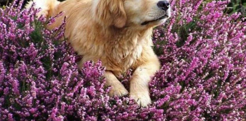 Minicurso Terapias Naturais em Animais